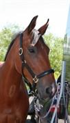 Hest til salg - LADY-FREEDOM Z
