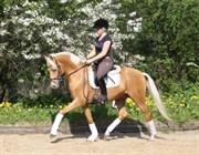 Hest til salg - Dancing Whisper