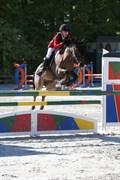 Hest til salg - KOMET