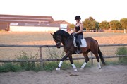Hest til salg - Lauries Star Lerup II