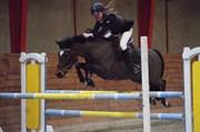 Hest til salg - OPUS ONE