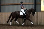 Hest til salg - TRØSTRUPLUND'S RAFINETT