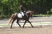 Hest til salg - Arvalon Geronimo (OS)