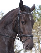 Hest til salg - CARLOS