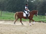 Hest til salg - LUNDERHEDES PRILINO