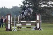 Hest til salg - BIRKEGÅRDENS CONTADOR