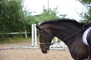 Hest til salg - SHAKIRA WUNDER