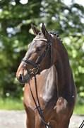 Hest til salg - Lurifax