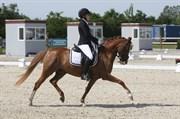 Hest til salg - VOLDEMORT