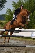Hest til salg - TITUS
