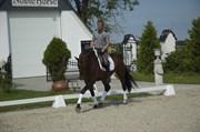 Hest til salg - NOBLE VISION