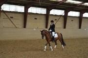 Hest til salg - STORGAARDS AMADEUS
