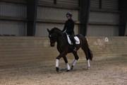 Hest til salg - BECAS SANTADOR