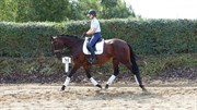 Hest til salg - LYKKESBORGS RAMONA