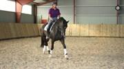 Hest til salg - ALMROTHS SIDAN