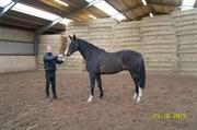 Hest til salg - SATSMO