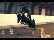Hest til salg - Hero 10