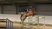 Hest til salg - Vivaldi-K