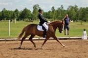 Hest til salg - FOXTROT