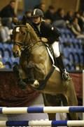 Hest til salg - DALVANGS CASPER