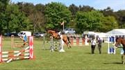 Hest til salg - A.N. PAVLOS