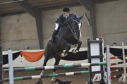 Hest til salg - REGGAE