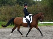 Hest til salg - SEJLGAARDS MICKEY