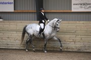 Hest til salg - SYVHØJEGÅRDS BOUNTY