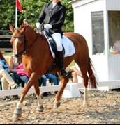 Hest til salg - SKOUHAVEN'S REBEKKA