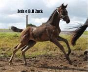 Hest til salg - Zeth