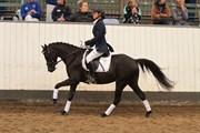 Hest til salg - NØRLUNDS SIRONA