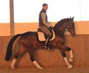 Hest til salg - FRANCESCA