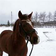 Hest til salg - Eppynt Dylan Thomas