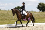 Hest til salg - EURO-STAR