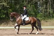 Hest til salg - CHÂTEAU ROYAL