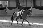 Hest til salg - CASIDO