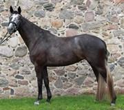 Hest til salg - SALLY LANGHOLT