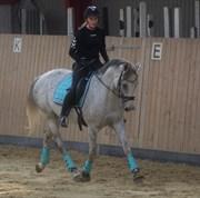 Hest til salg - HEDEVANGS GALILEA