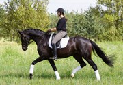 Hest til salg - DAHL'S PRINCESS SHADIA