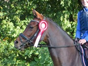 Hest til salg - KULI´S MAYBE MAGIC