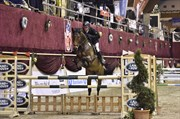 Hest til salg - RÅDBJERG´S CARDIFF