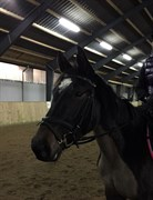 Hest til salg - ANNA-BELLA TOLSTRUP