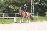 Hest til salg - NESLIHAN