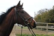 Hest til salg - SANTA SECRETA