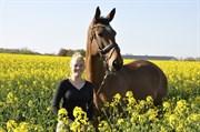 Hest til salg - MALOU