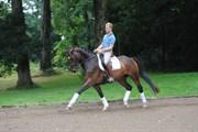 Hest til salg - Vallak