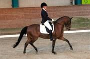 Hest til salg - EXCELLENT