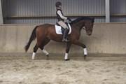 Hest til salg - NEWMOON