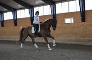Hest til salg - REVALDO D.