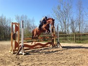 Hest til salg - EDDA